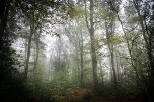 Forêt Centre Parquet Chêne Massif